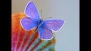 Radaid~~butterfly~~