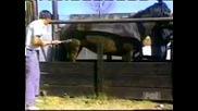 Kon zverski rita 4ovek