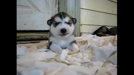 малко сладко куче говори ууникално
