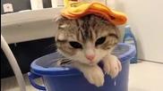 Смях! Сладко Коте След Парти!