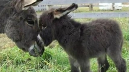 Най - сладкото клипче с бебета животни и техните майки