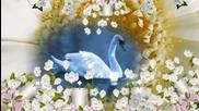 ░❀░ Къщата с лебедите! ... ...░❀░