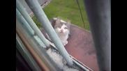 Луда котка следи гълъби от 7 етаж