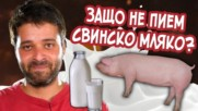 ЗАЩО не пием свинско мляко?