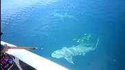 Акула атакува улова на рибар в открито море