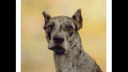 Говорещо куче