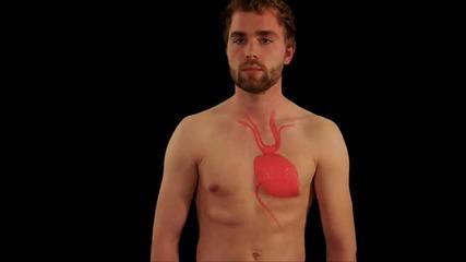 Учени изобретяват вечна биобатерия, която черпи енергия от тялото ни