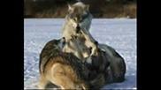 Ние Вълците