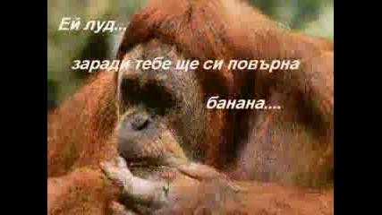 Животните Представят...