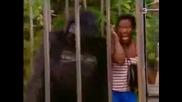 Скрита камера:в клетката на горилата