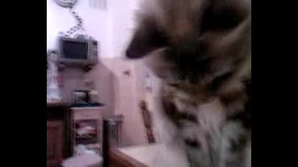 Наи Сладкото Котенце На Света !