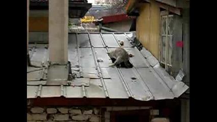 Котки Се Ебват На Студения Покрив