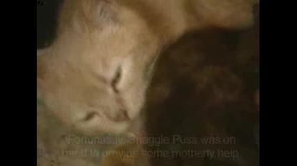 Котка осиновява заек (смях)