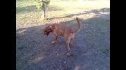 Chloе chasing a stick
