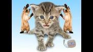 Котки Танцуват и Пеят