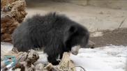 Ozzy Osbourne, Anthony Kiedis, Moby Stump for Mistreated Bears