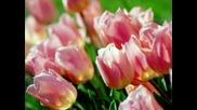 Цветя За Всички Приятели
