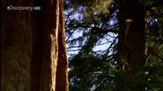 Sunrise Earth - Sequoia Light ( Part 3 / 5 ) * H D *