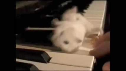 Hamster on a Piano