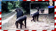 Смешни реакции на животни с огледало