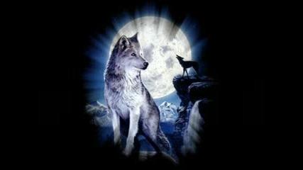 bate pe60 & Tina - Wolf (вълк)