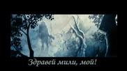 Smuglyanka Moldavanka Кървав клен - Amv Bloody maple