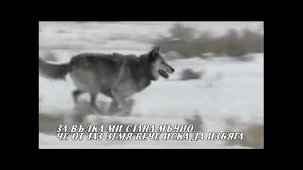 Вълците