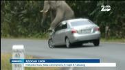 Ядосан слон изпочупи няколко автомобила в парк в Тайланд