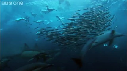 Hd Underwater Armageddon Nature s Great Events The Great Tide Bbc One