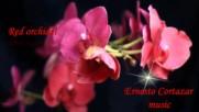 ... Червени орхидеи ... ( Ernesto Cortazar music) ...
