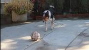 Това тренирано куче е на съвсем друг Level
