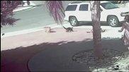 Котка Герой спасява малко момче от Разярено Куче !