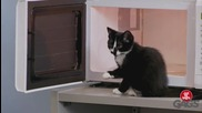 Най-добрите скрити камери с котки