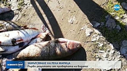 Установиха замърсителя на река Марица, изтровил голямо количество риба