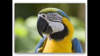 папагали_0001