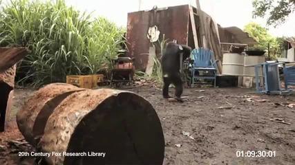 Шимпанзе пощурява с Ак-47