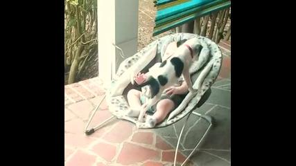 Питбулче се сгушва при бебок готово за да заспи!