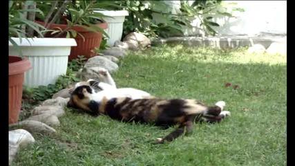 Малко котенце закача майка си