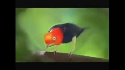 Птичка танцува като Michael Jackson