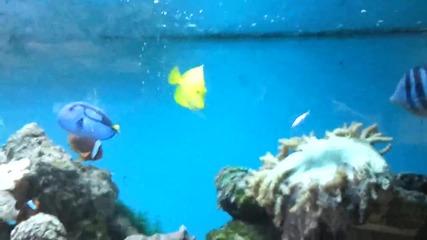 Рибки Nemo