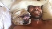 Смях ... Булдог издава смешни звуци, докатo се събужда!