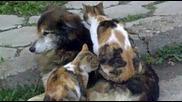 Котки правят масаж на куче в Кърджали смях :d