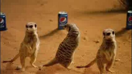 New* Pepsi - 2010