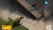 Куче стана хит в интернет, след като изгони мечка от частен имот