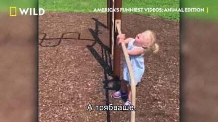 Компилация | Най-смешните домашни видеоклипове на Америка с животни | NG Wild Bulgaria