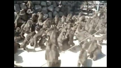 Най-смешните клипове за 2011 - 2012