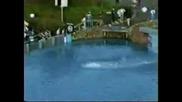 Най - високия скок във вода - 172ft (световен рекорд)
