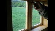Горски Недим - Звенимирската гора, поглед от чакалото.