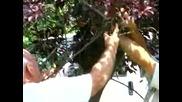 Най - лесния начин за хващане на пчелен рой
