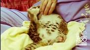Едно изключително сладко леопардче - направо да ти се прииска да го гушнеш!